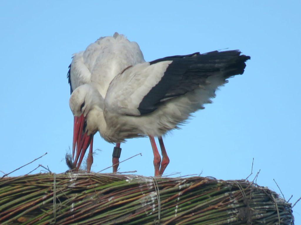 Samen een nest maken, foto Veronique Breeu