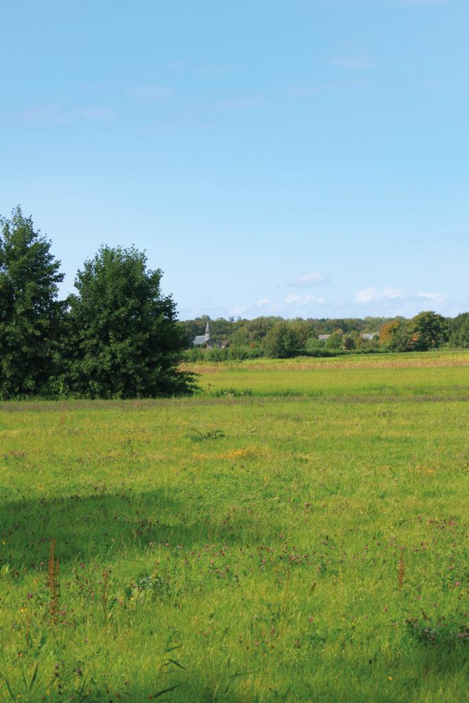 Tuinbouwgebied Haarlem